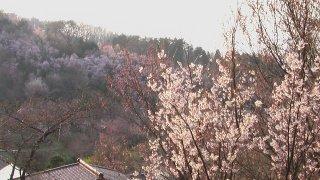 Hanamiyama200912